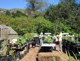 Dragon's Bend Nursery, Muir Beach